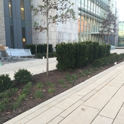 New grass and trees make the Courtyard area cozy and inviting
